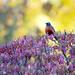 The Robin! by fayefaye