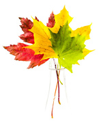 23rd Oct 2014 - red yellow green