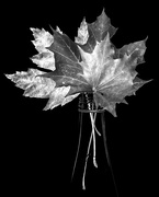 24th Oct 2014 - ode to fall