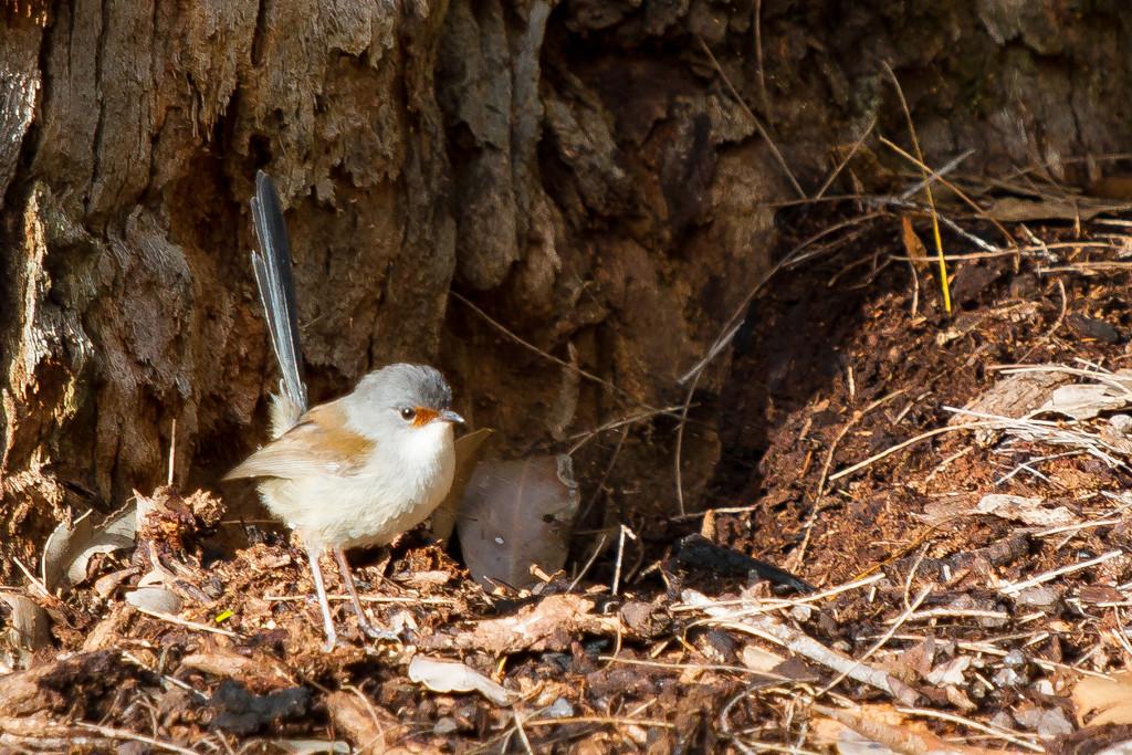 Little bird by gosia