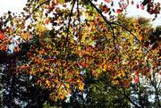 24th Oct 2014 - Leaves