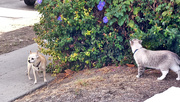 25th Oct 2014 - Sniffing