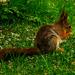 Squirrel by elisasaeter