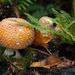 Temperate Rainforest Magic by epcello