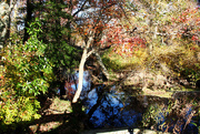 26th Oct 2014 - Autumn Reflections