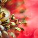 poppy pollen by kali66