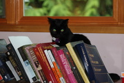 24th Oct 2014 - Bosco on the dresser