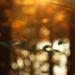 Greeting Sunrise by mzzhope