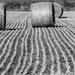 Bringing in the hay by flyrobin