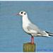 Bird's Eye View by carolmw