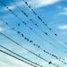 Birdies on wires