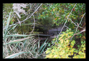 28th Oct 2014 - Looking into our Bayou