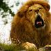 Yawn by elisasaeter