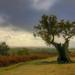 Tenacity by shepherdmanswife