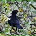 Blackbird by rosiekind