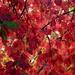Finally Fall by linnypinny
