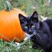 Happy Halloween! by cjwhite