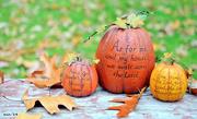 31st Oct 2014 - My Pumpkins