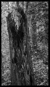 31st Oct 2014 - Woods