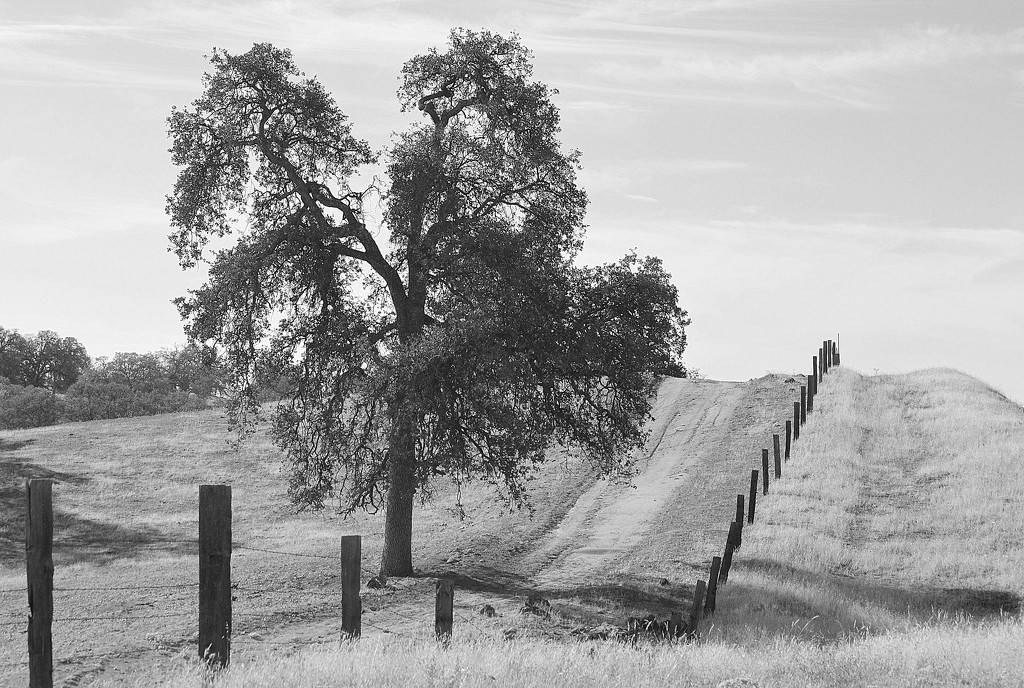 Fence, Road, and Tree  by kareenking