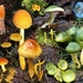 Rainbow of Fungi by ethelperry