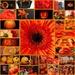 Its all orange! by bizziebeeme