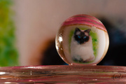 2nd Nov 2014 - Cat in a small ball