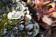 2nd Nov 2014 - Tree Fungi