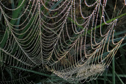 2nd Nov 2014 - The Spiders were Busy!