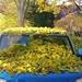 Leaf rain by edorreandresen