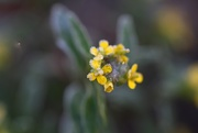 3rd Nov 2014 - Frosty yellow flower
