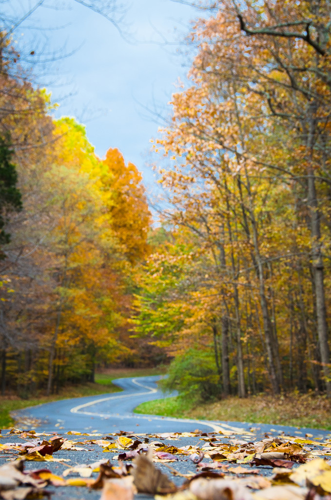 Twist and Turns Of Fall by lesip