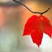 A Leaf  by mzzhope