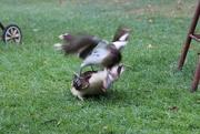 3rd Nov 2014 - Bird Strike