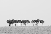 4th Nov 2014 - Trees