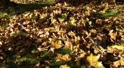 4th Nov 2014 - Autumn Fall