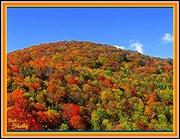 4th Nov 2014 - A Patchwork of Color