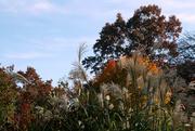 4th Nov 2014 - Autumn in Richland