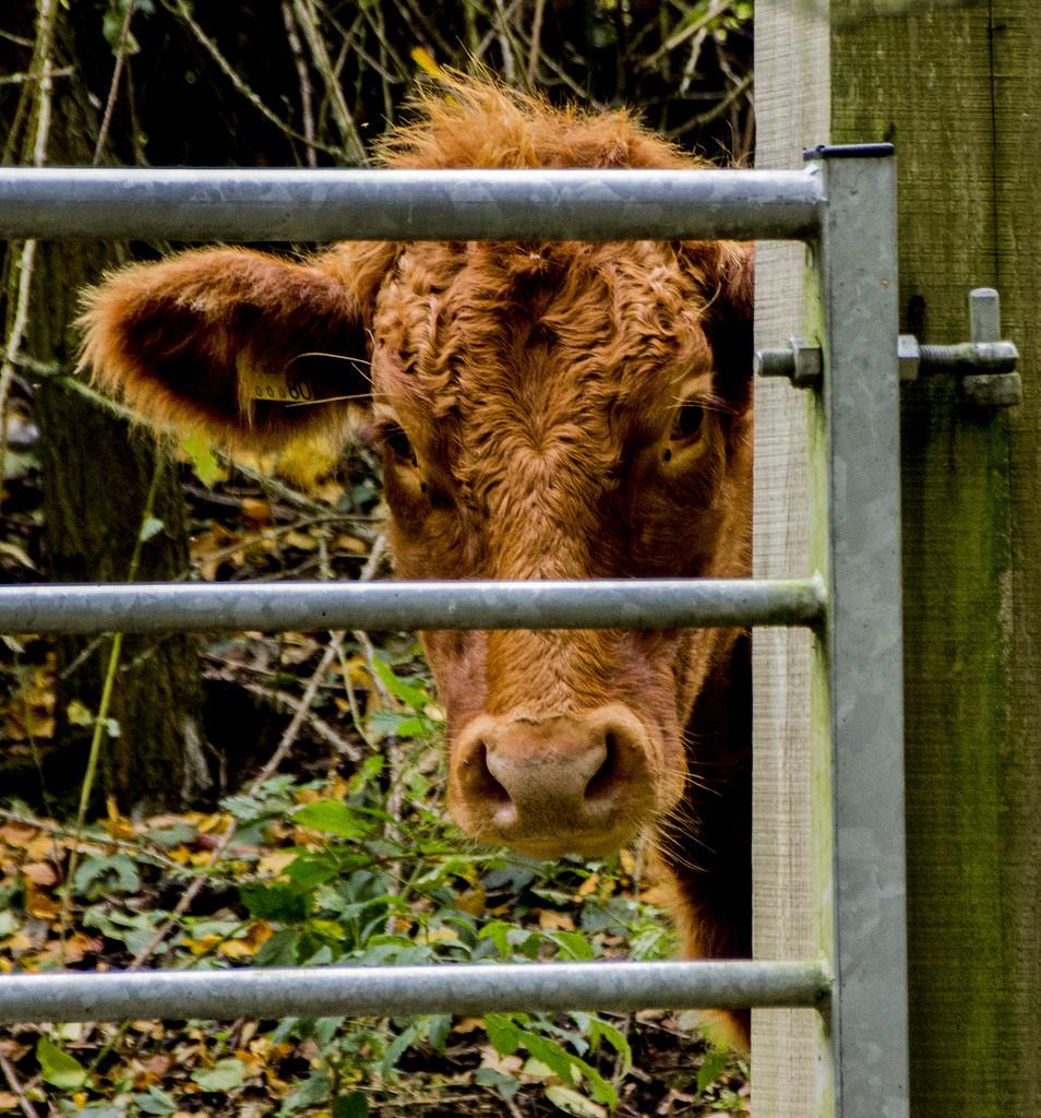 Meeting at the gate by shepherdman