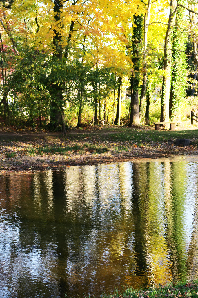 Reflections in the Pond by april16