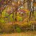 kaleidoscope in the woods