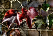 11th Oct 2014 - Autumn Leaves