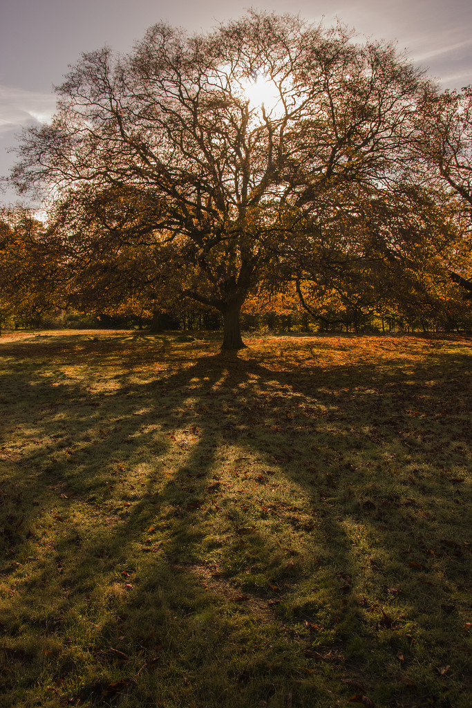 The slow onset of autumn by shepherdman