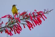 6th Nov 2014 - Pretty bird on pretty flower