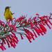 Pretty bird on pretty flower by bella_ss
