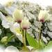Garden Icecream by maggiemae