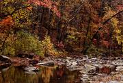 6th Nov 2014 - Down in the Creek