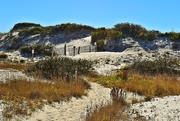 7th Nov 2014 - Sand dunes
