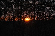 8th Nov 2014 - Tangled Up Jungle Sunrise