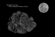 7th Nov 2014 - Moon and Roses